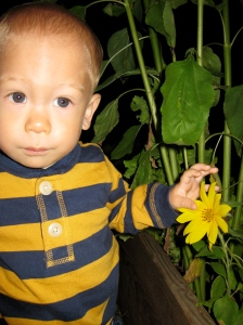 Aukai and his first sunflower